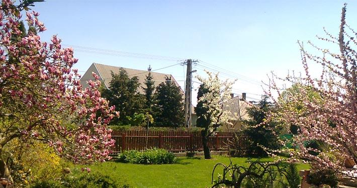 Szeretne egy tökéletes alapot kertjének? Akkor igényeljen profi füvesítést!