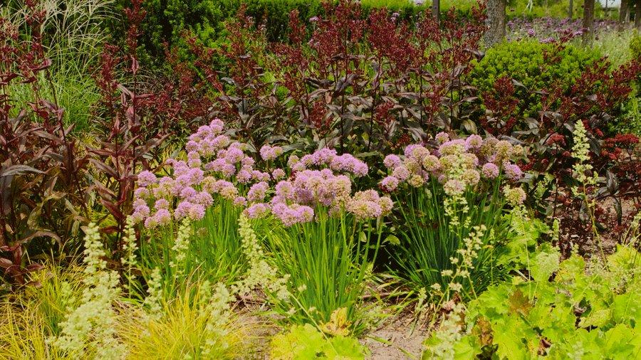 Ültessen kertjébe különleges virágokat!