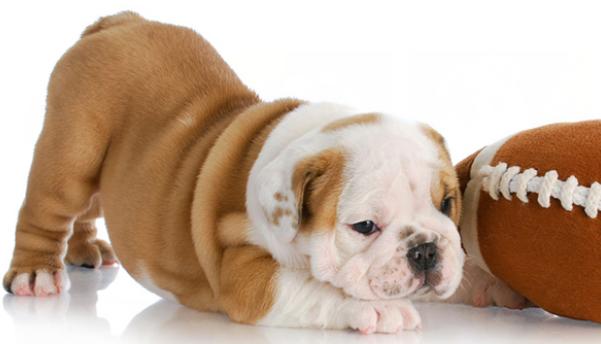 A minőségi kutyafelszerelés