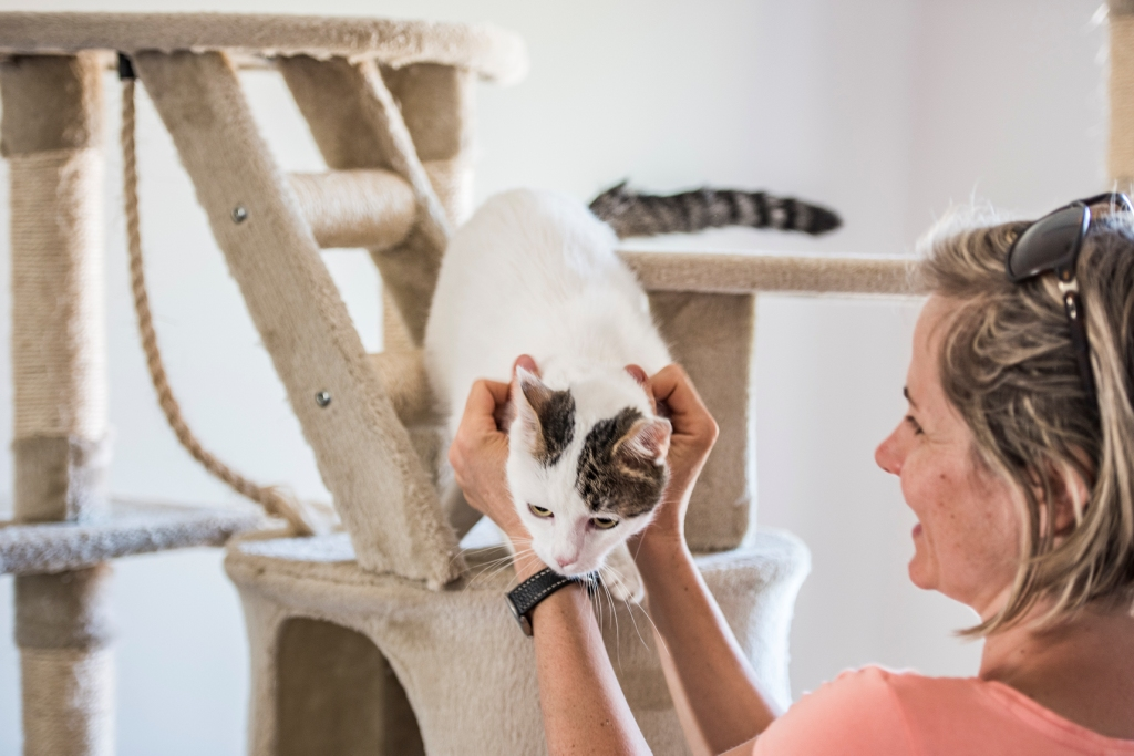 Remekül felszerelt, barátságos macska napközi Sümegen