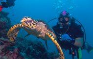 Ismerje meg a víz alatti világot!