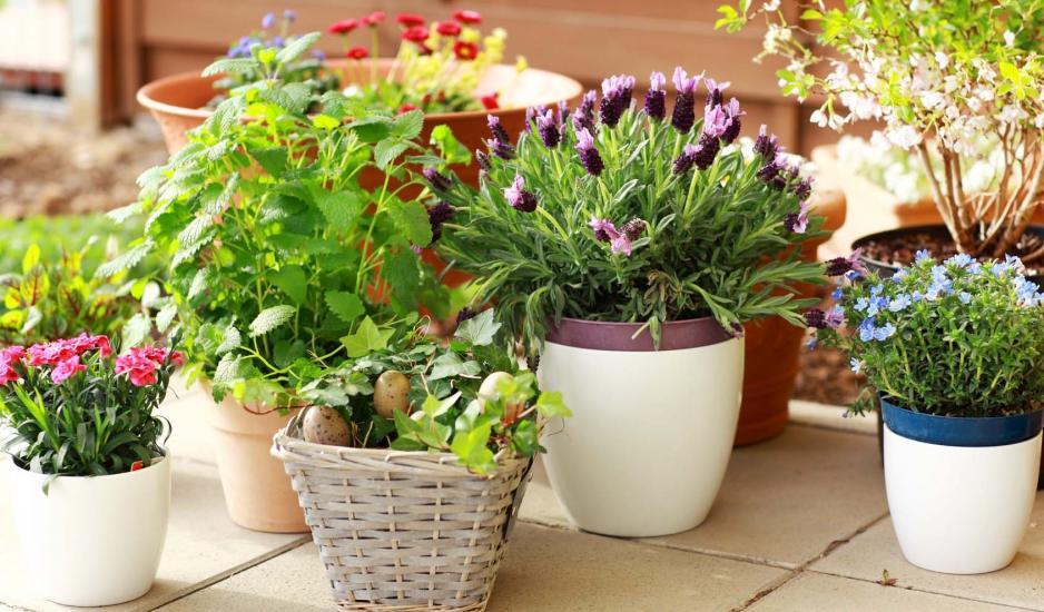 Könnyítse meg virágai mozgatását!