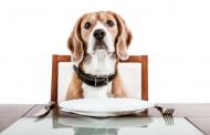 A minőségi kutyatápok