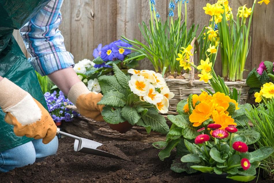 Színesítse a környezetét kertészetből rendelt csodaszép növényekkel!