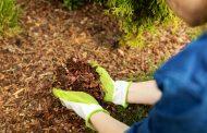 Fenyőmulcs: az ezerarcú talajtakaró